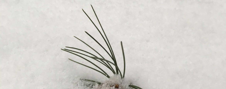 5 dingen die je kunt doen tegen voorjaarsmoeheid